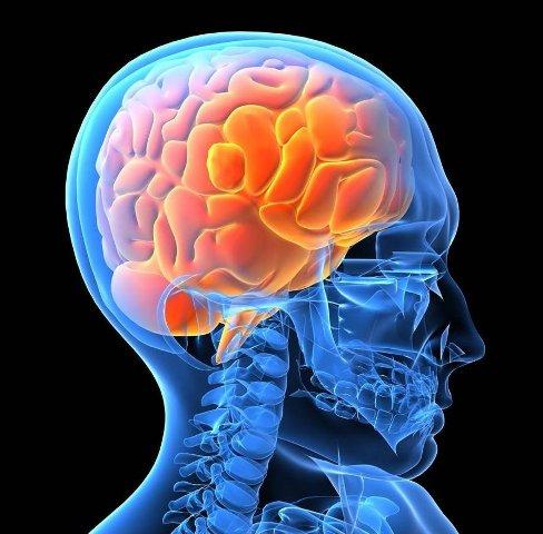Мозг человека интересные факты
