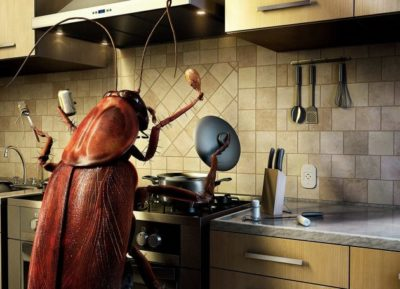 Как вытравить тараканов