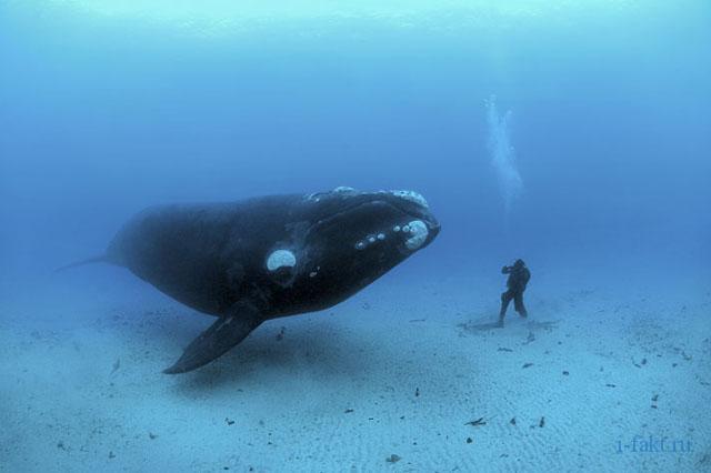 Какое самое большое животное в мире?